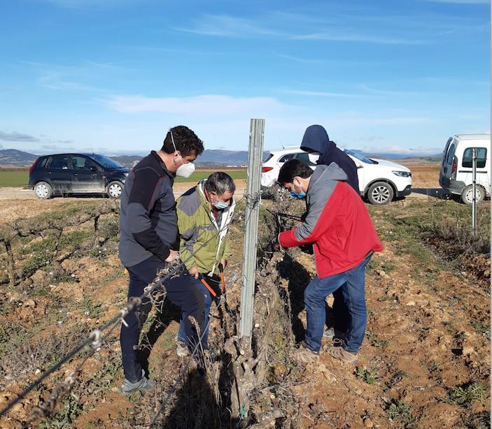 Cabecera Jornada de Poda con Viticultura Viva - Novedades Viveros Landaza